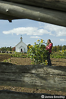 Young girl standing besie sunflowers with chapel in the background