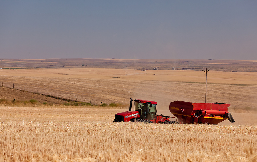 A Case 335 tractor pulls a Sunflower grain hauler through a wheat field in the Palouse of Eastern Washington State.