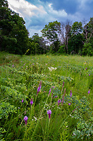 A storm approaches Nachusa Grasslands Nature Conservancy with Blazing Star in Summer bloom, Ogle & Lee Counties, Illinoi