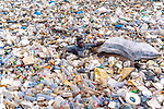 Men swim through rubbish strewn waters to find plastic to sell by Muntaka Chasant