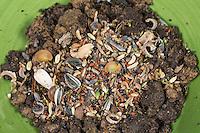 Samenbombe, Samenbomben, Samenkugel, Samen-Kugel, Samen-Bombe, Samenball, Samen-Ball, Kugel aus Erde, Ton oder Lehm und verschiedenen Samen, Pflanzensamen, Blumensamen, Wildblumenmischung, Wildblumen-Mischung, Früchten, Samenmischung, Gartenarbeit, Guerilla-Gärtner, Guerillagärtnerei, urbanes Gärtnern, Begrünung, Wildblumen, Wildkräuter. Seedbomb, Seedbombs, Seed Bomb, earth balls, Seed Ball, Urban gardening, Guerilla Gardening. Mit Samen von Akelei, Lavendel, Ringelblume, Kresse, Fenchel, Kümmel, Kapuzinerkresse, Silberblatt, Sonnenblume, Spitzwegerich, Sauerampfer, Stockrose, Mohn, Distel, Lichtnelke, Giersch, Wiesenkerbel und anderen mehr.