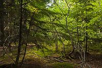 Trail of the Cedars II