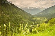 Image Ref: SWISS073<br /> Location: Switzerland<br /> Date of Shot: 23rd June 2017