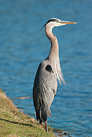 BIRDS<br />