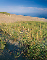 Cape Cod National Seashore, MA<br /> Dune grasses on the upper slopes of a beach at Head of the Meadows Beach near North Truro