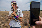 Black-footed Cat (Felis nigripes) conservationist and farmer, Nikki Gibbs, holding female during collaring and being photographed, Benfontein Nature Reserve, South Africa