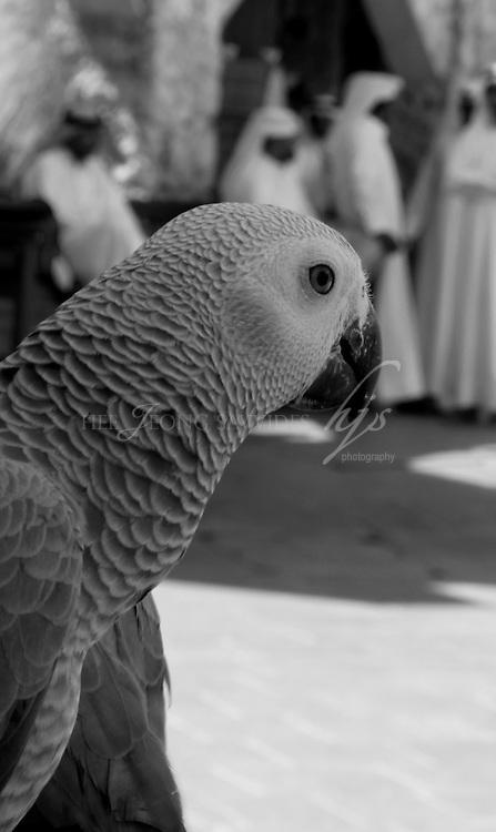 Souq Waqif, Doha, Qatar | Mar 10