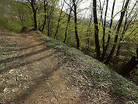 FOREST_LOCATION_90187