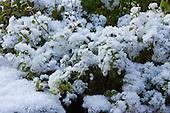 Tuinkruiden - Peterselie | Herbs - Parsley