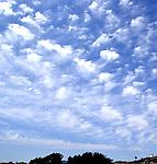 Olive Hill Skies