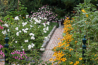 Brick path lined with Rudbeckia flowers in organic backyard garden with vegetables, roses and fruit trees