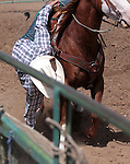 While riding at full speed, Danny Pacheco picks up a loose rope during the double mugging event at the Minden Ranch Rodeo in Gardnerville, Nev., on Sunday, July 22, 2012..Photo by Cathleen Allison