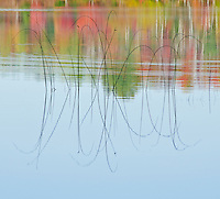 Reeds and autumn colors reflect in the waters of Moccasin Lake, Hiawatha National Forest, Alger County, Michigan