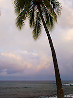 A palm tree against a cloudy sunrise viewed at Honi's Beach, Kailua-Kona, Big Island.