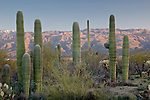 The Sonoran Desert in Saguaro National Park - Rincon Mountain District, Tucson, AZ, USA