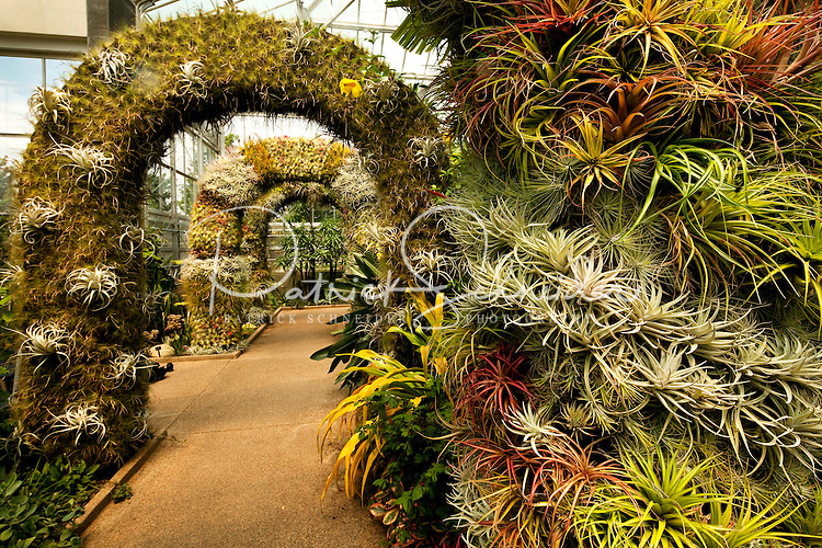 Bon The Orchid Conservatory At Daniel Stowe Botanical Garden. The Gardens  Attract Plant, Flower And