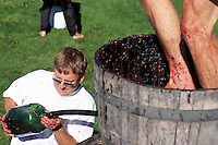 Competitors competing in Grape Stomping Competition, at annual Festival of the Grape, Oliver, BC, Okanagan Region, British Columbia, Canada