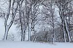 Europa, DEU, Deutschland, Nordrhein Westfalen, NRW, Rheinland, Niederrhein, Duesseldorf-Kaiserswerth, Schneebedeckte Baeume, Morgens nach Schneefall, Neuschnee, Baumreihe, Kategorien und Themen, Natur, Umwelt, Landschaft, Jahreszeiten, Stimmungen, Landschaftsfotografie, Landschaften, Landschaftsphoto, Landschaftsphotographie, Wetter, Wetterelemente, Wetterlage, Wetterkunde, Witterung, Witterungsbedingungen, Wettererscheinungen, Meteorologie, Wettervorhersage....[Fuer die Nutzung gelten die jeweils gueltigen Allgemeinen Liefer-und Geschaeftsbedingungen. Nutzung nur gegen Verwendungsmeldung und Nachweis. Download der AGB unter http://www.image-box.com oder werden auf Anfrage zugesendet. Freigabe ist vorher erforderlich. Jede Nutzung des Fotos ist honorarpflichtig gemaess derzeit gueltiger MFM Liste - Kontakt, Uwe Schmid-Fotografie, Duisburg, Tel. (+49).2065.677997, ..archiv@image-box.com, www.image-box.com]