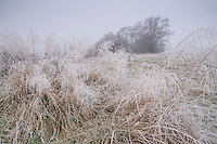 Frost at Dinkling Green, Whitewell,Clitheroe, Lancashire, England.