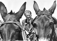 Billy Graham driving a mule team  to the Cow Palace..Brisbane, Ca (July 21,1971 photo/Ron Riesterer)