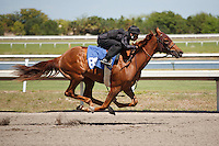 #85Fasig-Tipton Florida Sale,Under Tack Show. Palm Meadows Florida 03-23-2012 Arron Haggart/Eclipse Sportswire.