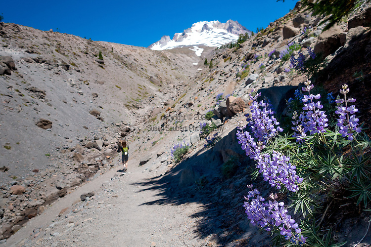 The Pacific Crest Trail at Timberline Lodge on Mt. Hood, Oregon