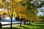 Autumn trees lining the seawall in the Coeur D Alene City Park