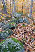 Old stone wall along the abandoned Thornton Gore Road in Thornton, New Hampshire. This was an old hill farm community that was abandoned during the 19th century.