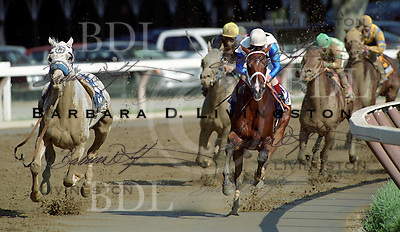Gander at Saratoga (left, no rider).  2002. Saratoga Race Course, Saratoga Racetrack, beautiful horse racing, Thoroughbred racing, horse, equine, racehorse, morning mood
