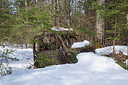 Abandoned truck in forest of Franconia, New Hampshire USA during the spring months. This is possibly a late 1930s / 1940s Chevrolet or GMC truck.