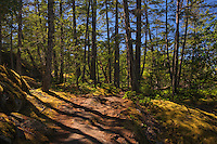 trail in forest near Sechelt<br /> Smuggler Cove Marine Provincial Park<br /> British Columbia<br /> Canada