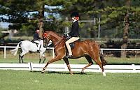 Champion Small Pony