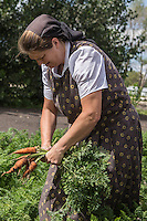 A Hutterite woman picks carrots in a New Rosedale Hutterites colony field in Manitoba, Monday August 17, 2015. Hutterites are am ethno-religious group who, like the Amish and Mennonites, trace their roots to the Radical Reformation of the 16th century.