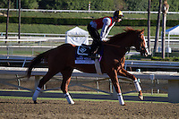 Shakleford galloping for trainer Dale Romans at Santa Anita Park in Arcadia California