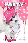 Samantha, ANIMALS,  photos,+dogs,++++,AUKPSP104,#A# Humor, lustig, divertido