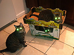 Three striped cats expectantly looking toward the camera, all with Halloween like GLOWING GREEN EYES.  Using a iPhone Camera, this was accidental humor that would be ruined by using the Pet Eye tool.