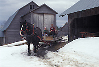 sleigh, Vermont, VT, Man and woman driving horse and sleigh to collect sap for maple sugaring on Carpenter Farm in Cabot in the snow in the early spring.