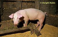 SH11-015z  Pig - in barn