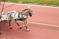 ATENÇÃO EDITOR: FOTO EMBARGADA PARA VEÍCULOS INTERNACIONAIS. SAO PAULO, SP, 19 DE SETEMBRO DE 2012. CORRIDA ENTRE CARRO E CARRUAGEM NA MARGINAL PINHEIROS. Carruagem chega a ciclovia da Marginal do Rio Pinheiros para corrida entre carro e carruagem. A largada foi na estação Granja Julieta da CPTM e o final foi embaixo da ponte estaiada. FOTO ADRIANA SPACA = BRAZIL PHOTO PRESS