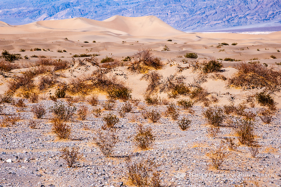 United States, California, Death Valley. The Mesquite Flat Sand Dunes are at the northern end of the valley floor.
