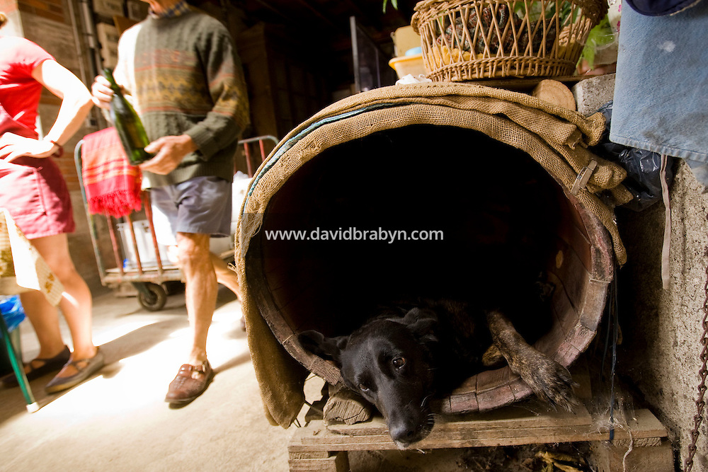 Winemaker Daniel Jarry's dog rests in her kennel made out of a wine barrel, as participants in a Backroads cycle tour of the Loire Valley have lunch at the cellars in Vouvray, France, 26 June 2008.
