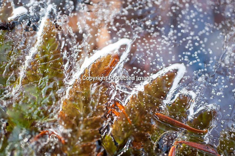 Ferns under Ice