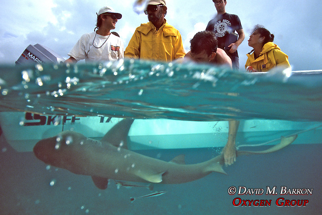 Rick Kirkham Holding Tagging Lemon Shark With Sam & Aya Gruber, Jean & Jon