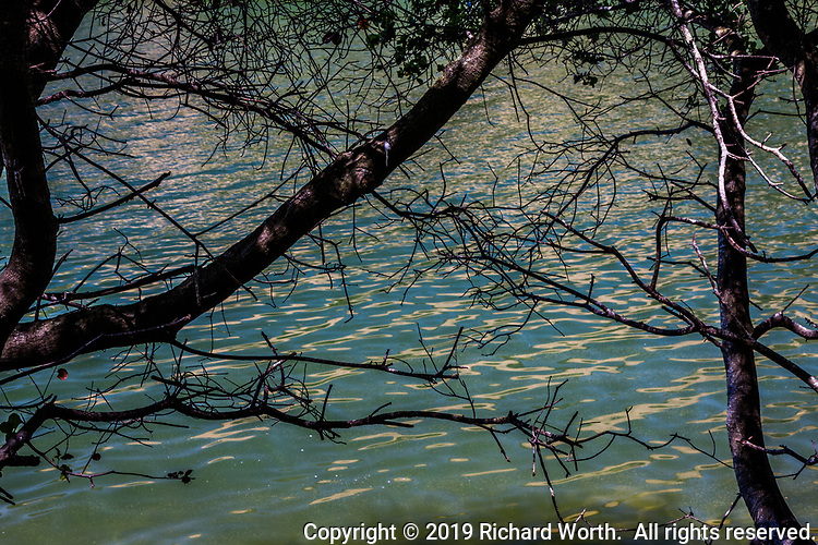 Shimmering ripples on Lake Chabot glimmer through the tangled web of tree limbs along the path along the lake's shoreline.