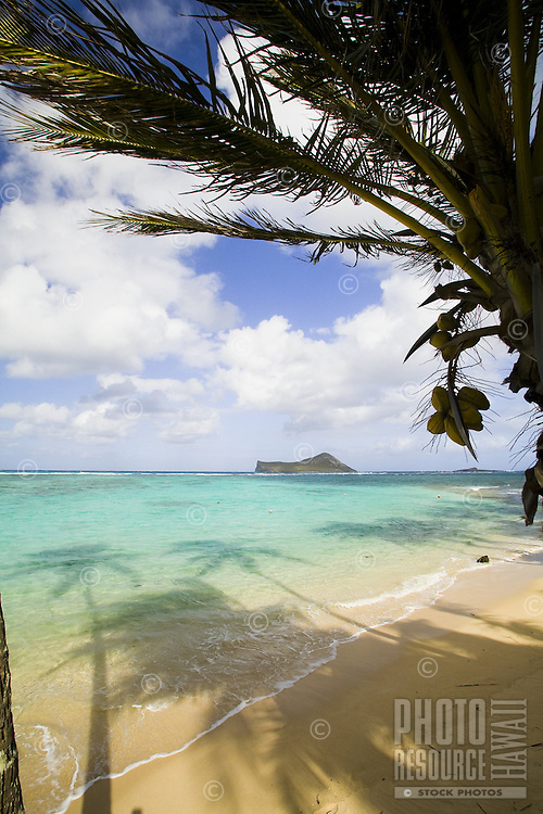 Palm lined white sand beach with palm tree shadows and turquoise water in Waimanalo, with Rabbit Island in the background