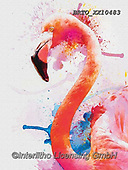 Alfredo, REALISTIC ANIMALS, REALISTISCHE TIERE, ANIMALES REALISTICOS, paintings+++++,BRTOXX10483,#a#, EVERYDAY,flamingo,flamingos