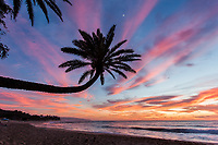 Colorful sunset behind a palm tree at Sunset Beach, Oahu