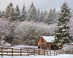 Vashon-Maury Island, WA: Newly fallen snow blankets weathered barn and surrounding forest.