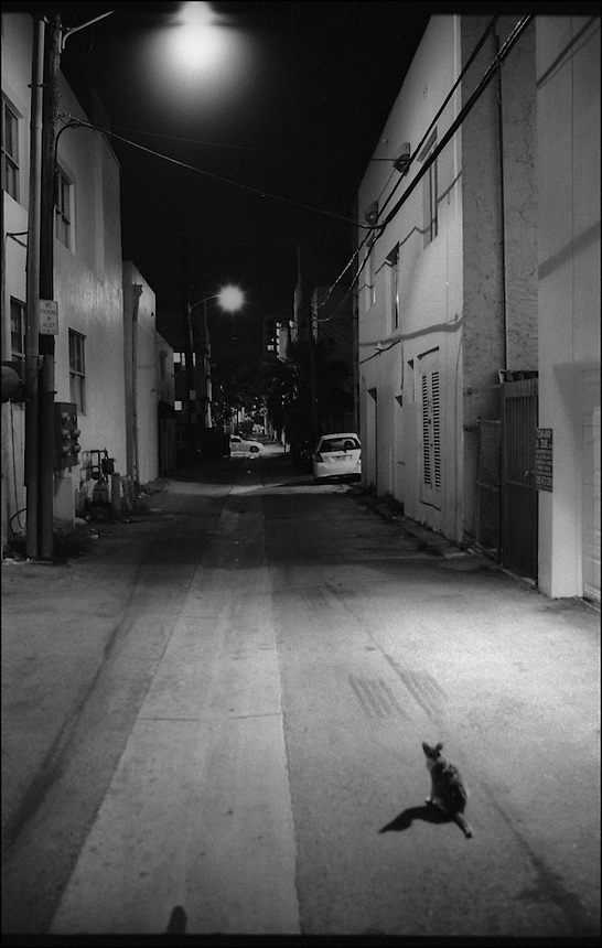 In the alley<br /> From &quot;Miami Nights&quot; series<br /> Miami Beach, May 2011