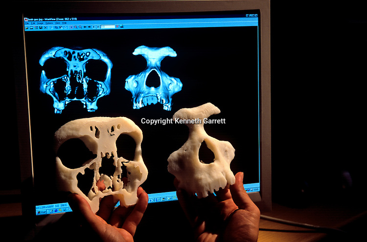 cross secstions of a model skull with thier computer images